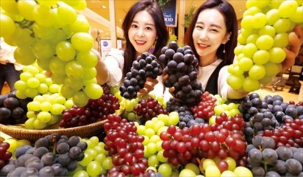 샤인머스켓·거봉·캠벨 등 5가지 포도 '달콤한 여름'