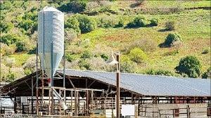 위성지도상에 넓은 지붕이 있으면 축사나 공장이 있을 확률이 높다.