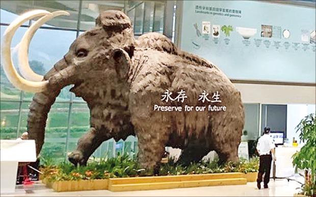 중국 선전의 BGI 본관 1층에 매머드 모형이 세워져 있다. 이 회사는 유전체 연구로 4000년 전 사라진 매머드를 복원한다는 계획을 갖고 있다.  /선전=심은지  기자