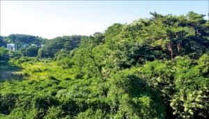 충남 서산시 지곡면 주말농장