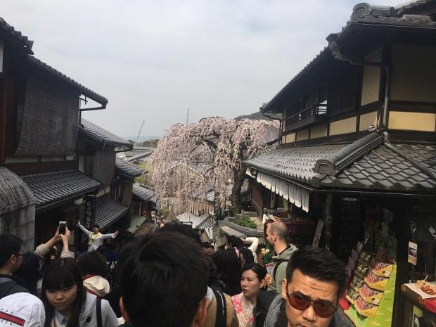 일본을 찾은 관광객들로 붐비는 교토