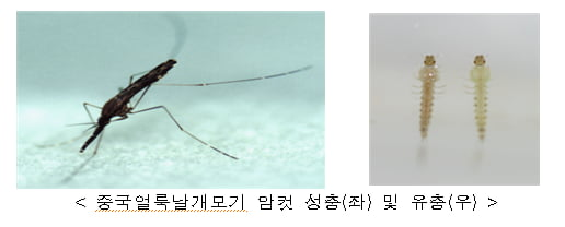 경기도 파주서 말라리아 원충 감염된 얼룩날개모기 확인