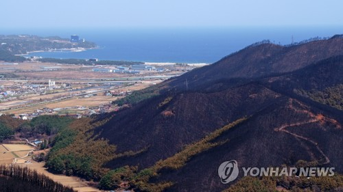 강원산불 피해지에 '서울의 숲' 조성…업무협약