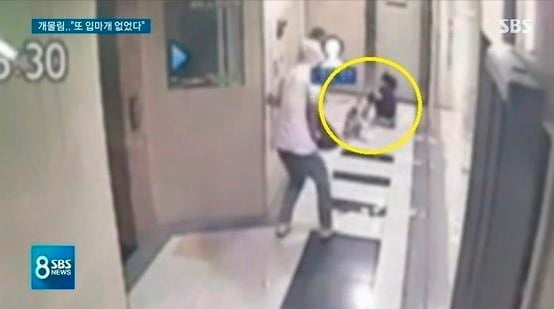 폭스테리어 /사진=SBS '8뉴스' 캡처