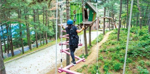 숲 속 어드벤처 프로그램 '삼림모험 레포츠'
