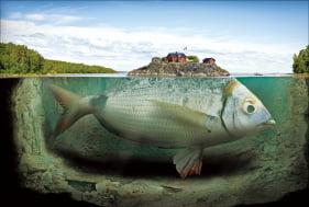 [사진이 있는 아침] 환상의 세계에서 만난 물고기