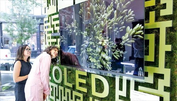 뉴욕 베이커리와 만난 LG 올레드 TV