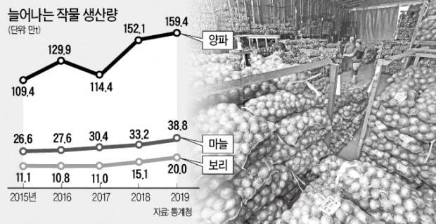 풍년의 역설…농산물값 폭락에 재정부담 커진다