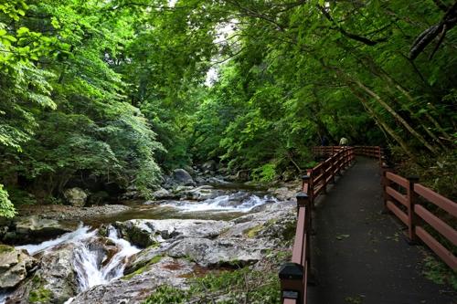 [걷고 싶은 길] 유유자적 초록빛 계곡길