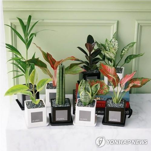 충북도, 미세먼지 저감 '반려식물 지원센터' 조성 추진