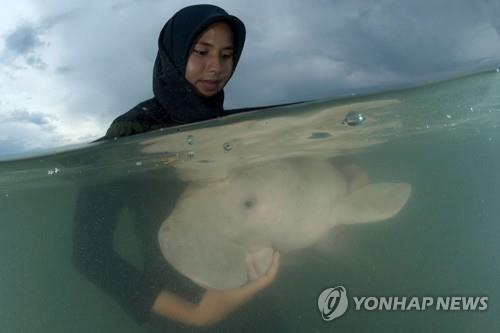 태국 '아기 듀공' 폭발적 인기에 하루 관람객 수 제한키로