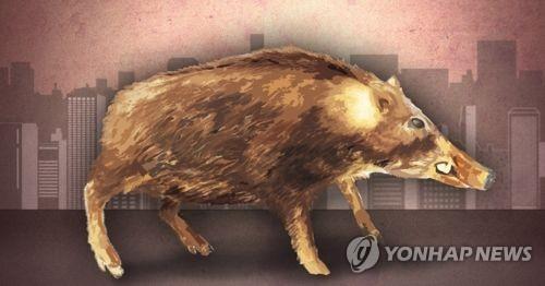 서울 아파트단지 인근서 멧돼지 4마리 사살…휴일아침 깨운 총성
