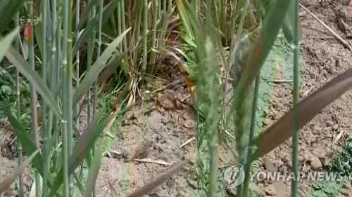 北총리, 가뭄피해 속 곡창지대 시찰…용수 확보 독려