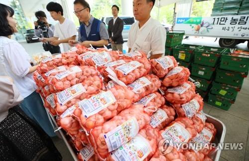 경기도, 가격폭락 마늘·양파 5천t 팔아주기 추진