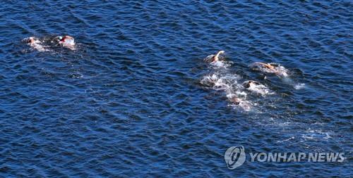 [광주세계수영] 내일의 하이라이트(13일)