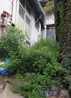 서울 사직동 사직2구역의 골목길. 안쪽에 집이 있지만 아무도 살지 않아 진입로엔 성인 허리춤까지 풀이 자랐다. 전형진 기자