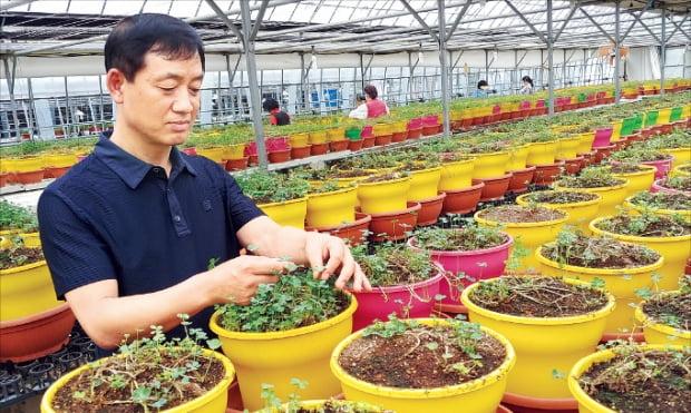 홍인헌 푸드클로버 사장이 경기 과천 농장에서 네잎클로버의 여러 용도에 대해 설명하고 있다.