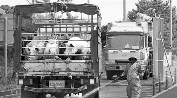 20일 제주시 한림읍 금악2교차로의 아프리카돼지열병(ASF) 거점 방역초소에서 방역 담당자들이 돼지 운송차량을 소독하고 있다.  연합뉴스