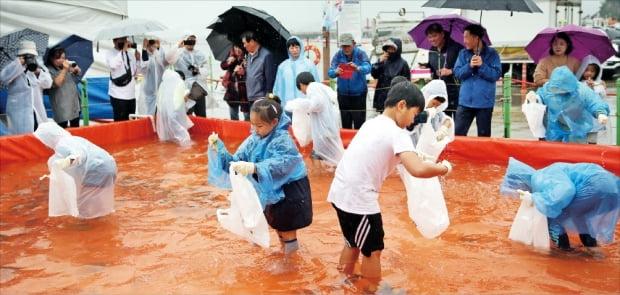 서천군 홍원항에 마련된 전어 잡기 체험장에서 아이들이 전어를 맨손으로 잡고 있다.  서천군 제공