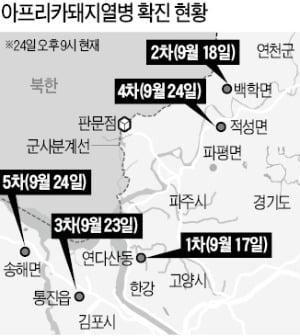 """파주→연천→김포→강화·파주…돼지열병 급속 확산 """"국가재난으로 간주"""""""