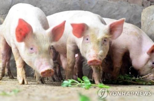 8월에 값 47% 폭등…中 큰 고민, 무역전쟁보다 '돼지고기 파동'