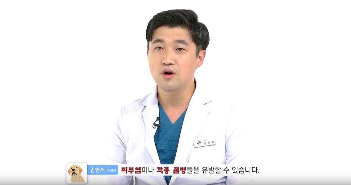 MCN뉴스 | 반려견에게도 해로운 미세먼지, 수의사가 알려주는 꿀팁!