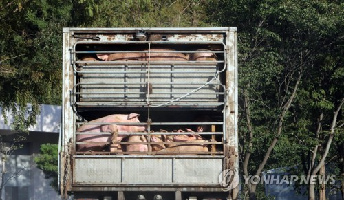 충남 1227개 농가 일제소독…멧돼지 기피제도 보급