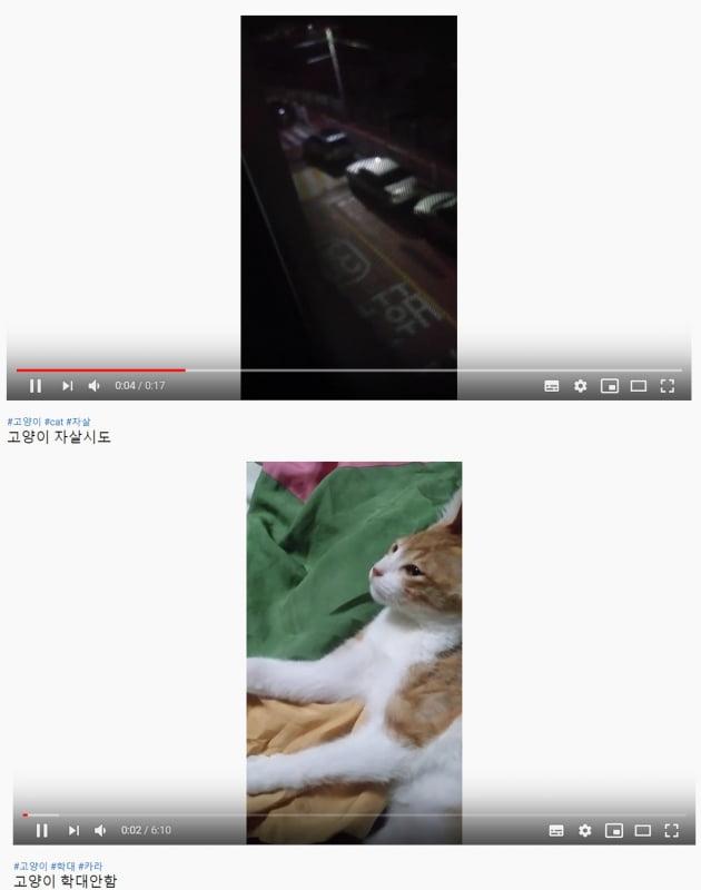 팬티 속에 고양이 넣고, 성기 촬영까지…동물 학대 유튜버 논란