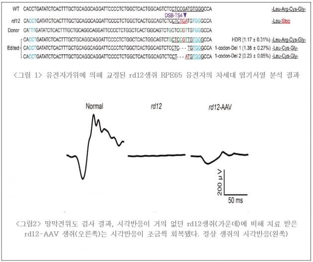 """툴젠 """"실명 유발 유전자 돌연변이, 동물서 교정 성공"""""""