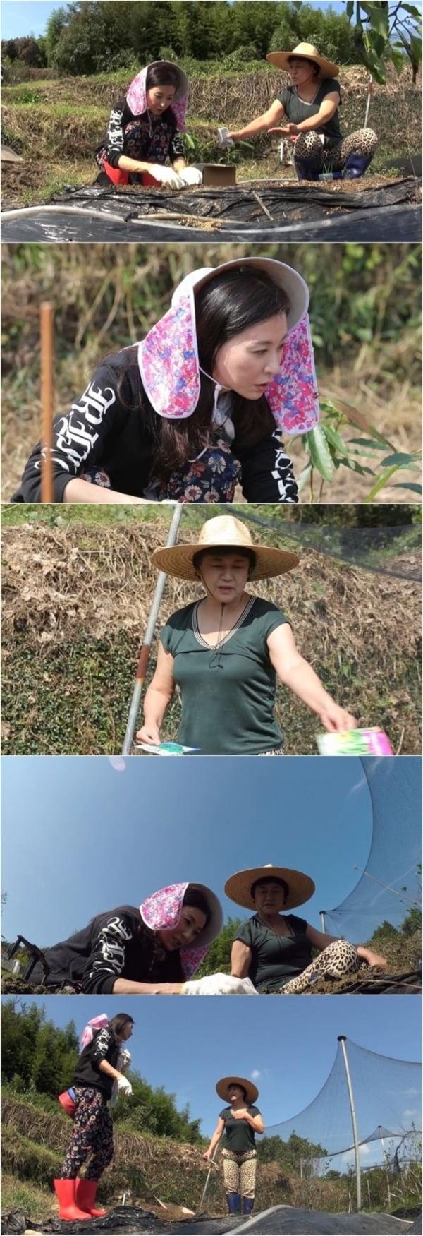 '모두의 패밀리' 성현아·박원숙 / 사진 = MBN 제공
