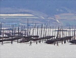 안좌도 앞 바다에 있는 지주식 김 양식장.