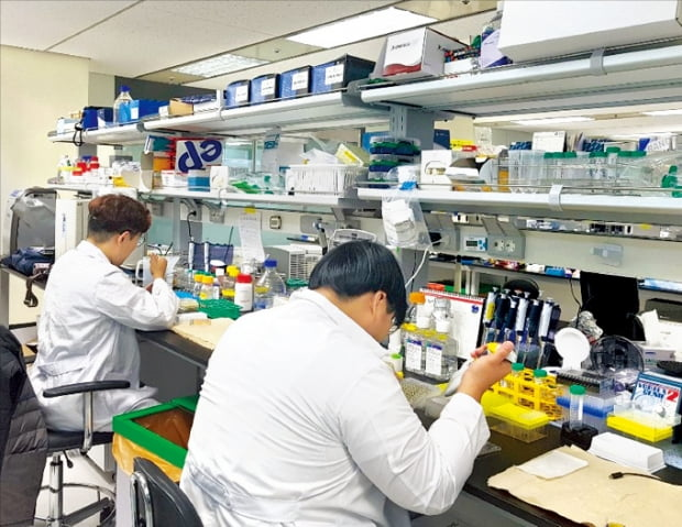 파멥신 연구원들이 대전 본사 연구소에서 신약 실험을 하고 있다.  파멥신 제공