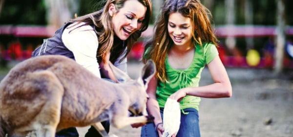 동물친화적인 커럼빈 야생 동물 공원에서는 캥거루가 관람객들과 자연스럽게 어울린다.