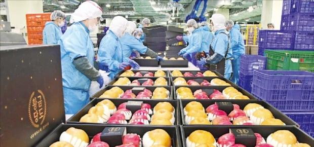 지난해 완공된 롯데신선식품혁신센터에서 직원들이 과일 상태를 살펴보고 있다.  롯데 제공