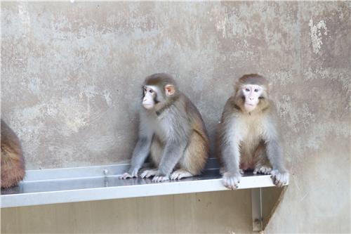 """""""원숭이가 전염병 숙주 가능성…실험실에 HACCP 도입해야"""""""