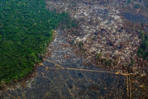 아마존 열대우림 무단벌채 급증…9월에 100% 가까이 증가