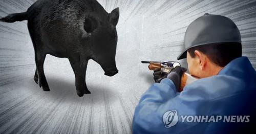 청주 도심 행사장 주변에 멧돼지 출현…마취총 쏴 포획