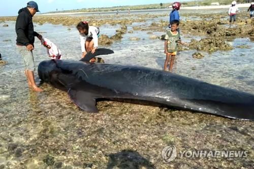 인니 동부해변 밀려온 고래 7마리 떼죽음…고립사고 반복 지점