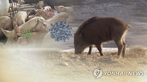 서울서 야생 멧돼지 잇따라 출몰…2마리 사살 후 방역