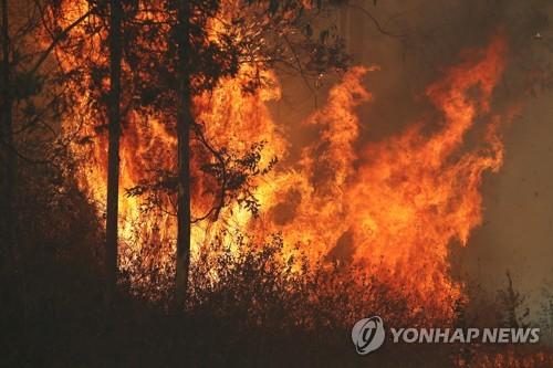 호주 대형 산불로 노부부 사망…가뭄·강풍으로 피해 커져