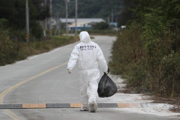 아프리카돼지열병 '비상' /사진=연합뉴스