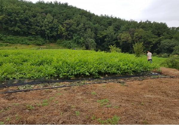3代 가업으로 이어지는 안정된 농장 창업