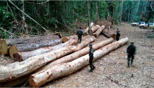 아마존 열대우림 무단벌채 여전…6월부터 증가세 이어져