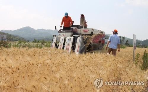"""보리 생산 올해 크게 늘어…김종식 전북도의원 """"소비대책 필요"""""""