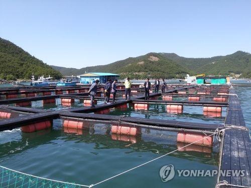 수과원, 저수온·한파 대비 양식어류 관리 당부