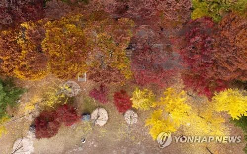 '가을아 가지 마' 남쪽으로 내려온 절정의 가을…단풍명소 북적