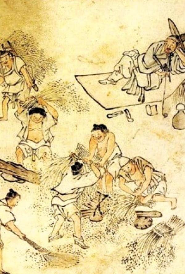 18세기 김홍도가 그린 타작(打作)