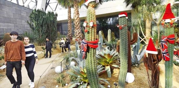 서울식물원의 '선인장 산타'