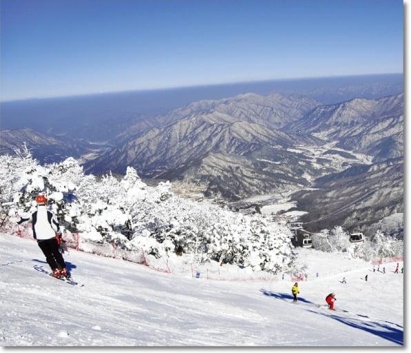 스키, 열정을 질주하다…스노보드, 자유를 점프하다