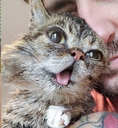 수백만 팔로워 거느린 '메롱 고양이' 릴버브 하늘나라로